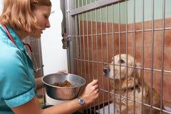 Veterinärkrankenschwester-Feeding Dog In-Käfig Stockbild