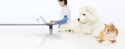 Veterinair concept veterinaire arts, hond en kat in dierenartsoffi stock afbeeldingen