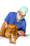 Veterinair with dog. Dog for an examination by the veterinair Stock Images