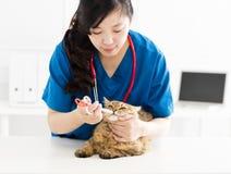 Veterinair Feeding en het helen van de zieke kat royalty-vrije stock afbeelding