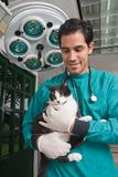 Veterinair het behandelen huisdier Stock Foto's