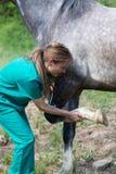 Veterinair op een landbouwbedrijf Royalty-vrije Stock Afbeelding