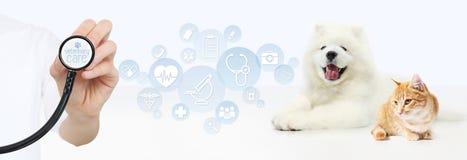 Veterinair zorgconcept hand met stethoscoop, hond en kat met royalty-vrije stock fotografie