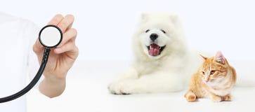 Veterinair zorgconcept hand met stethoscoop, hond en kattenisol stock fotografie