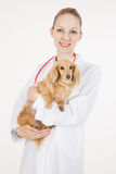Veterinaire arts Stock Afbeelding