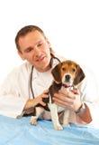 Veterinaire arts en een brakpuppy Stock Afbeelding