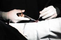 Veterinaire arts in verrichtingsruimte voor chirurgisch Stock Afbeelding