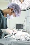 Veterinaire chirurgie in verrichtingsruimte Stock Fotografie