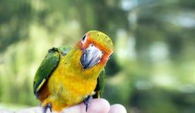 Veterinaire gevende injectie aan Shiba-inupuppy in dierenartskliniek royalty-vrije stock foto