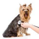 Veterinaire hand die een puppy onderzoeken Nadruk op de hand Stock Afbeelding