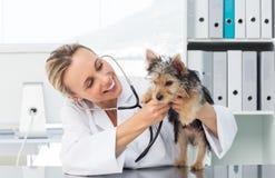 Veterinaire het controleren hond met stethoscoop Stock Foto