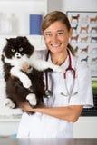 Veterinaire kliniek met een katje Royalty-vrije Stock Fotografie
