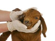 Veterinaire zorg stock foto's