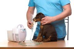 Veterinar和小狗与吸入器有吸入器的 免版税库存图片