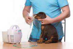 Veterinar y perrito con el inhalador con el inhalador Imagen de archivo libre de regalías