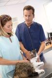Veterinari che discutono la salute del gatto Fotografie Stock Libere da Diritti