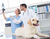 Veterinari che discutono raggi x del cane fotografia stock libera da diritti