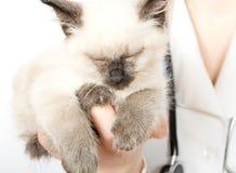 veterinarian котенка удерживания Стоковое Фото