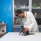 Veterinarian рассматривает больного кота Стоковое Фото