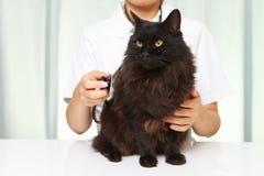 Veterinarian рассматривает кота Стоковая Фотография