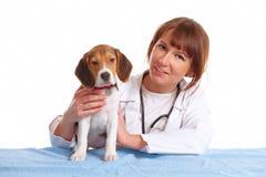 veterinarian щенка доктора beagle Стоковые Фотографии RF
