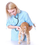 Veterinarian Stock Images
