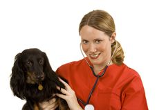 Veterinarian. Female vet in blue scrubs with a black dog Royalty Free Stock Images