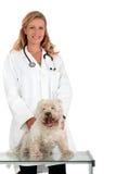 Veterinarian Stock Photos