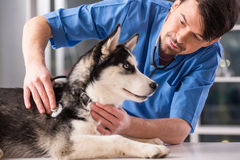 veterinarian Imagens de Stock