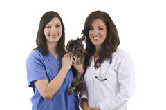 Veterinarian Royalty Free Stock Photo