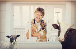 Veterinarian and animal clinic Stock Image