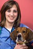 Veterinarian with a Beagle stock photos