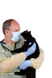 Veterinarian with black cat. Isolated veterinarian with black cat Stock Images