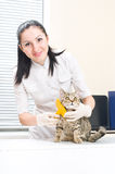 Veterinarian brushing kitten Royalty Free Stock Images
