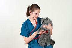Veterinarian and the cat Stock Images