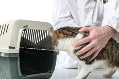 Veterinarian with cat and cat transport box Royalty Free Stock Photography