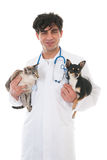 Veterinarian with cat and dog Royalty Free Stock Photography