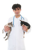 Veterinarian with cat and dog Stock Photos
