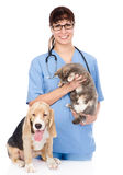 Veterinarian with cat and dog. isolated on white background Royalty Free Stock Image