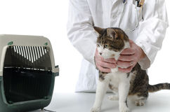 Veterinarian with cat Royalty Free Stock Photos
