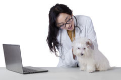 Veterinarian checks the cleanliness of dog fur Stock Photos