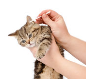 Veterinarian cleans ears to a small kitten. isolated Stock Images