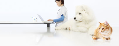 Free Veterinarian Concept. Veterinary Doctor, Dog And Cat In Vet Offi Stock Images - 95189974