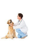 Veterinarian crouching with a dog Royalty Free Stock Images