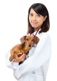 Veterinarian with dachshund dog Royalty Free Stock Photos