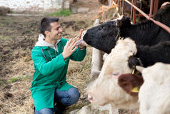 Veterinarian on dairy farm. Young happy veterinarian holding syringe and cuddle bull on farm royalty free stock images