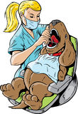 Veterinarian dentist Stock Photography