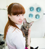 Veterinarian with devon rex cat in vet office.  royalty free stock photos