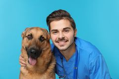 Veterinarian doc with dog. On color background royalty free stock image