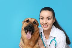 Veterinarian doc with dog. On color background royalty free stock photography